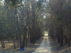 The Road to Laurelwood Plantation, Eastover, SC